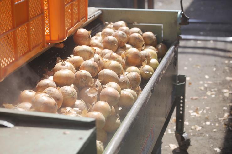 淡路島玉ねぎ蜜玉磨き作業の画像