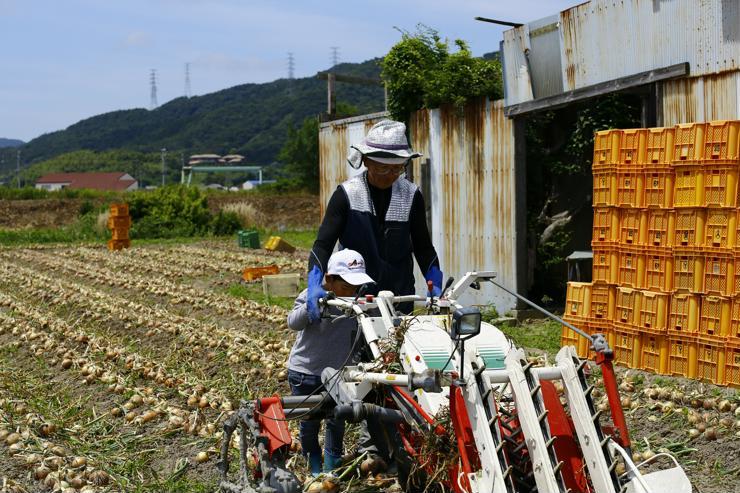 淡路島たまねぎを収穫するてっちゃん